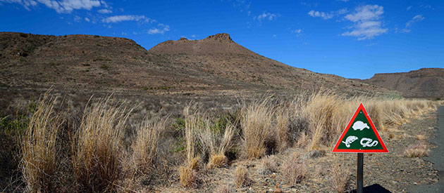 Things to do at the Karoo National Park